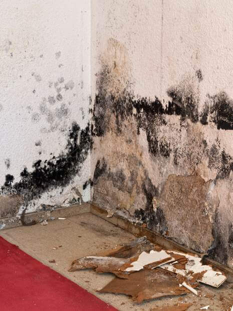 Professional Cleanup of Mold